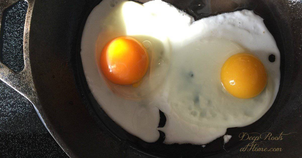 Why Free Range Eggs Are Nutritionally Superior & 3 Egg Brands I Trust. Golden yolk and yellow yolk