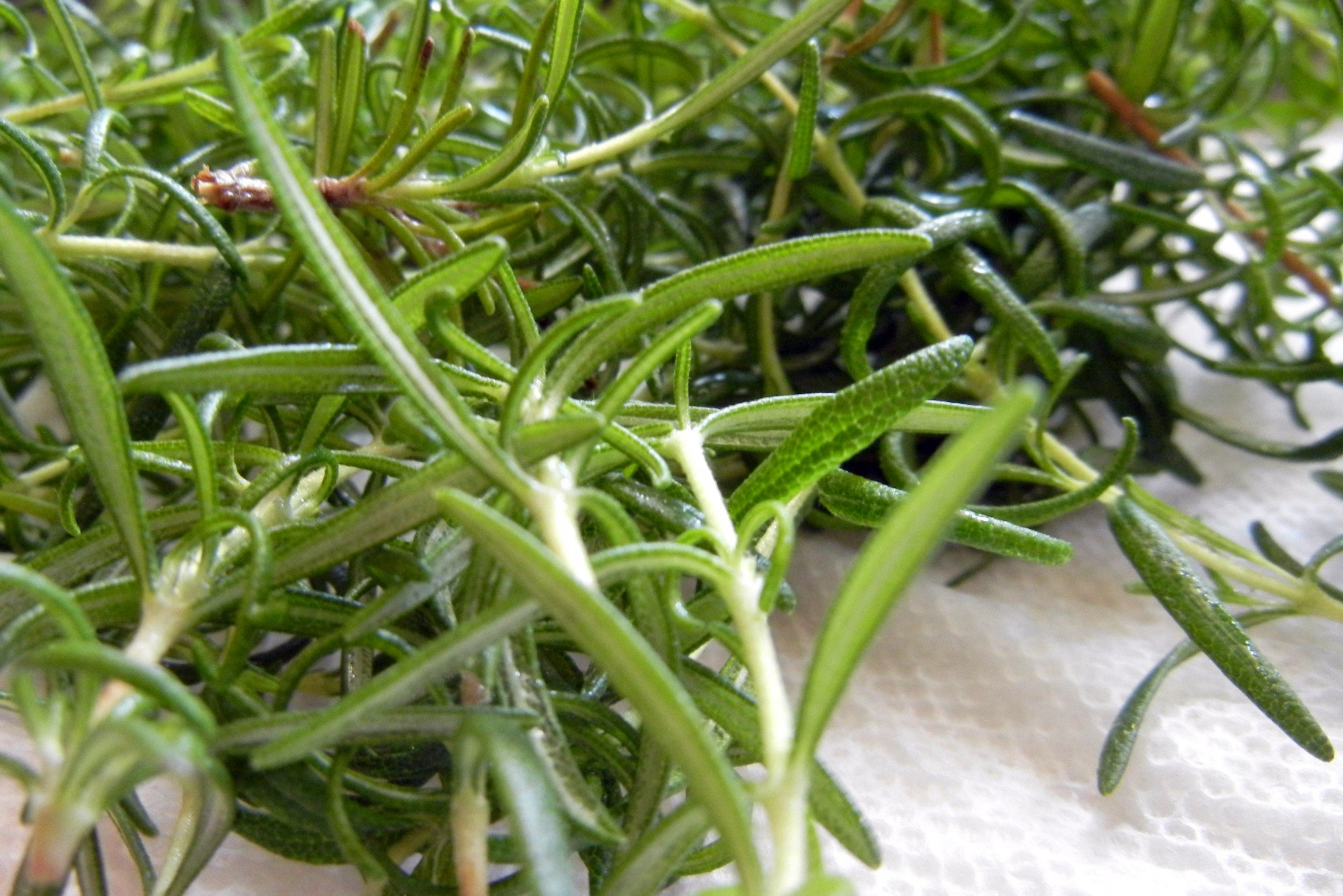 sprigs of fresh herb