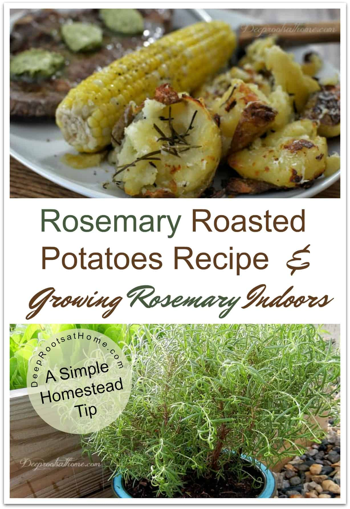 Rosemary Roasted Potatoes Recipe & Growing Rosemary Indoors. Rosemary roasted potatoes, corn and steak.