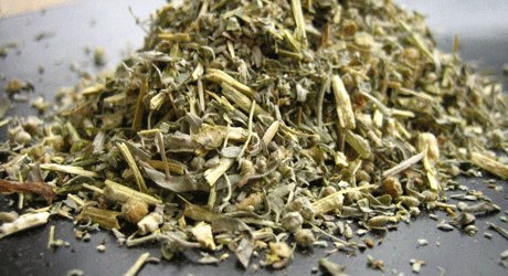 wormwood dried herb
