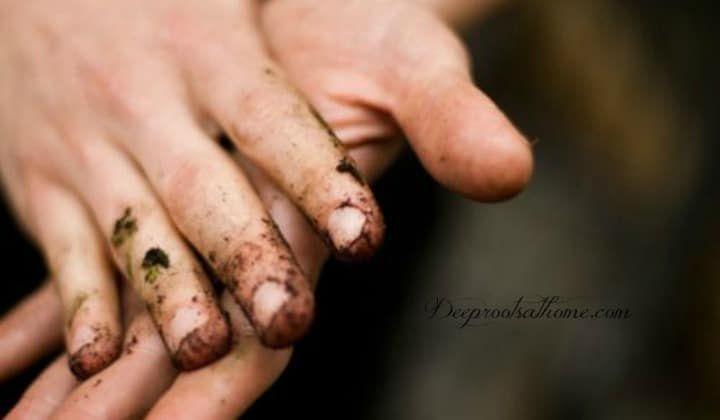 Remove Stains From Working Hands & Nails In One Easy Step, a gardener's dirty hands,