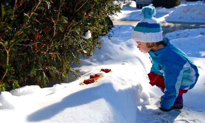 Backyard Birds & Natural Winter Food Sources We Can Provide. a child in her snow suit checking out food they put out to feed their birds!