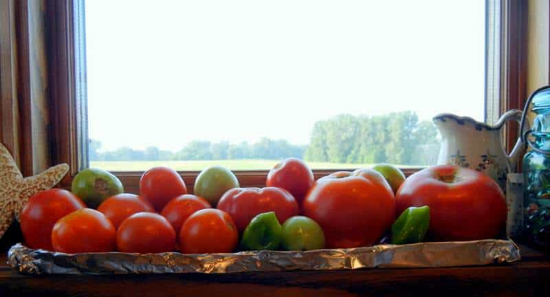 5 Reasons We Keep A Small Garden & An Interactive Garden Planner. A tray of tomatoes ripening in the window