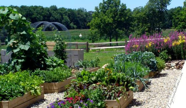 Ideas For Planning The Well-Producing, Sustainable Family Garden