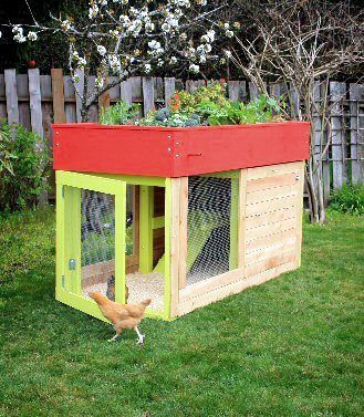 What Is A Chicken Tractor and Thoughts On Having Chickens, chicken coop in backyard, egg box, planter on top