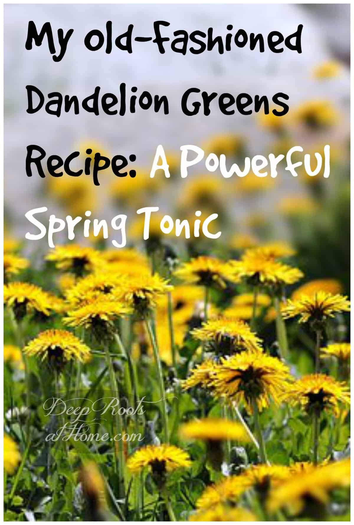 My Old-Fashioned Dandelion Greens Recipe: A Powerful Spring Tonic. spring dandelions and health benefits of the herb