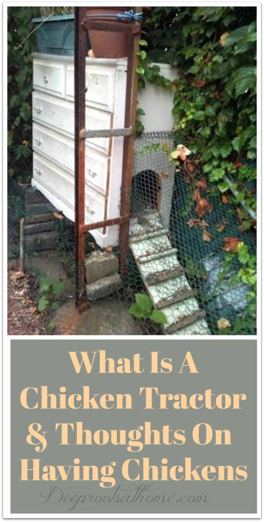 What Is A Chicken Tractor and Thoughts On Having Chickens. A cabinet as a chicken home