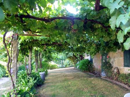 Creating Whimsy In Your Backyard & Garden, Part One. A shady porch of grape vines to shade house