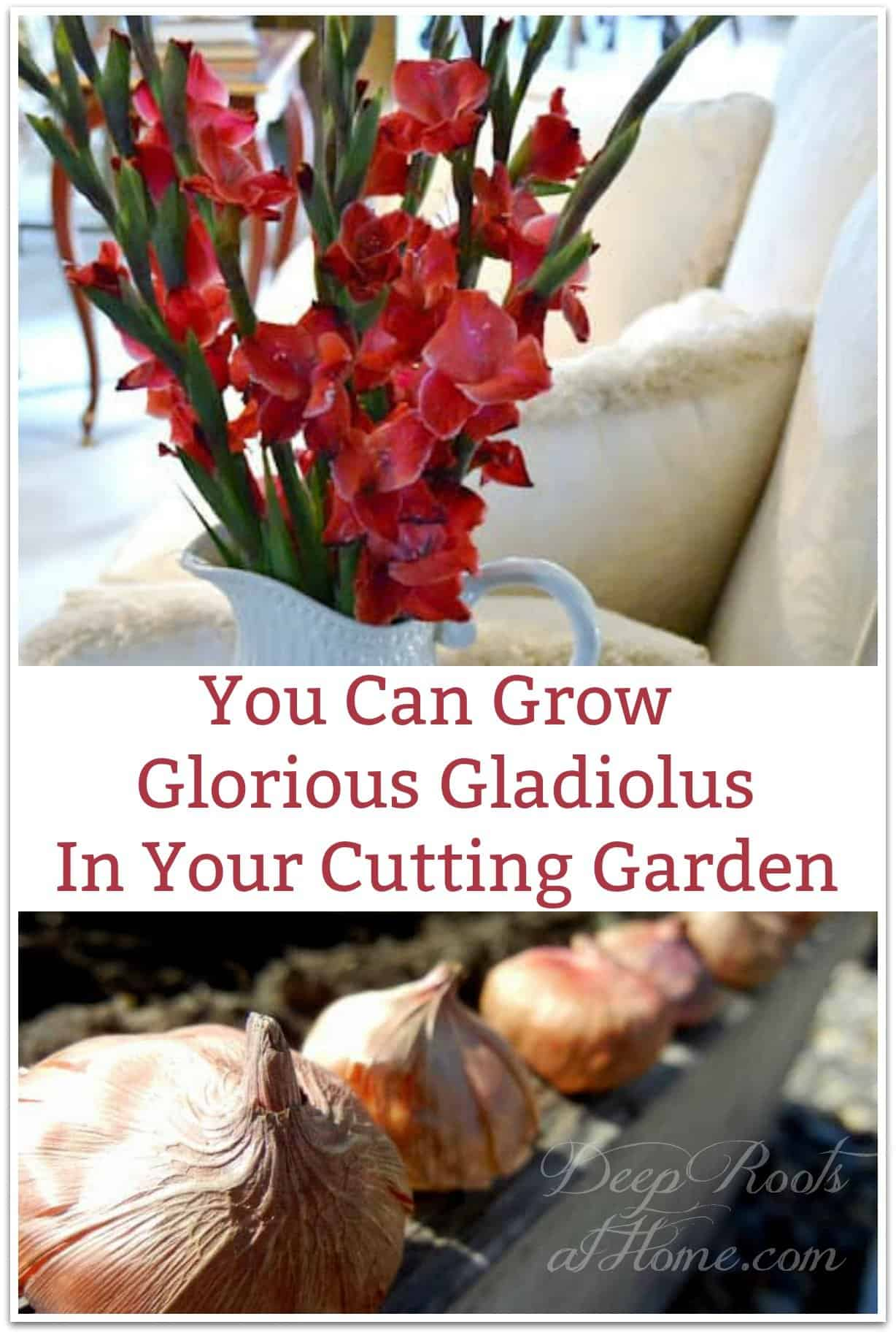 You Can Grow Glorious Gladiolus In Your Cutting Garden. graceful, long-stemmed red gladiolas in a vase