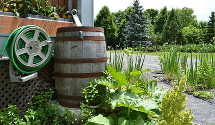 Rain Barrel Ramblings: Clever Ways To Water the Garden & Save. rain collection barrels