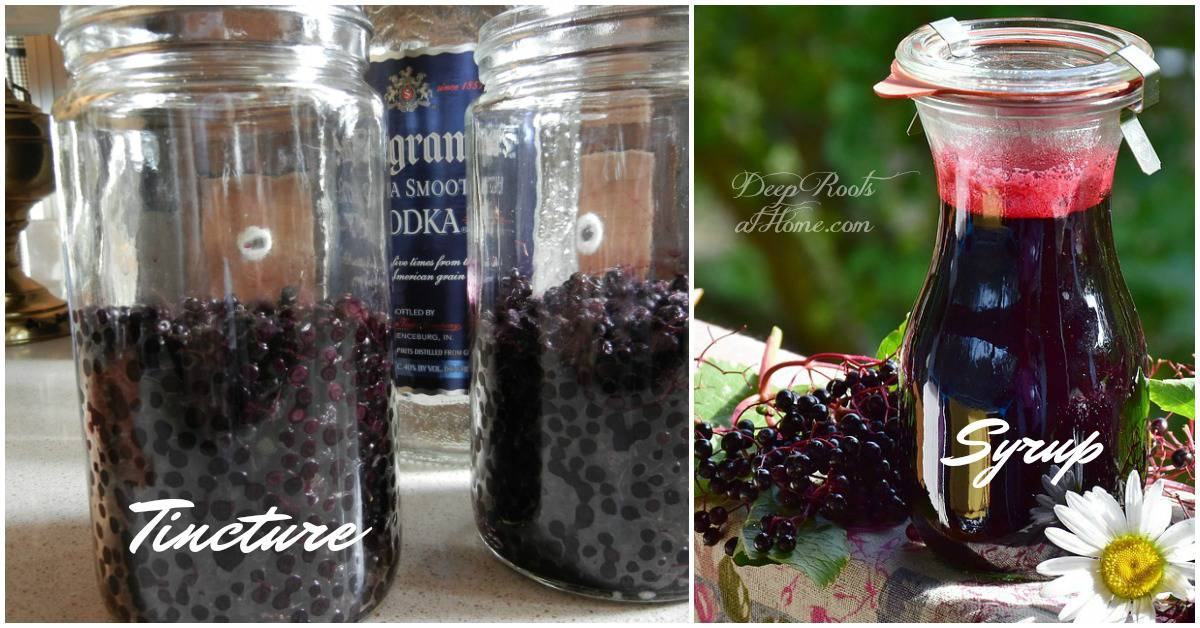 Elderberry Cold & Flu Syrup and Tincture: My Tried & True Recipes. DIY elderberry tincture. And Syrup.