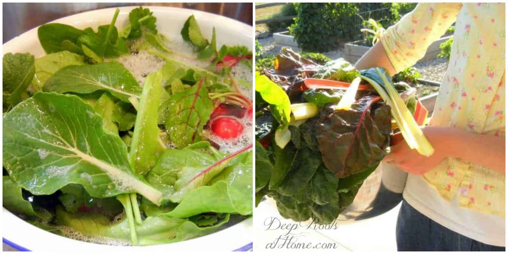 The In & Outs Of A Delightful And Productive (Cool Weather) Garden, fresh greens from the garden