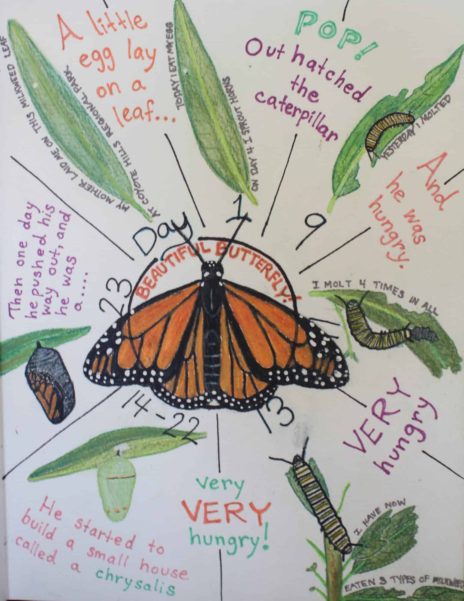 nature journal of monarch