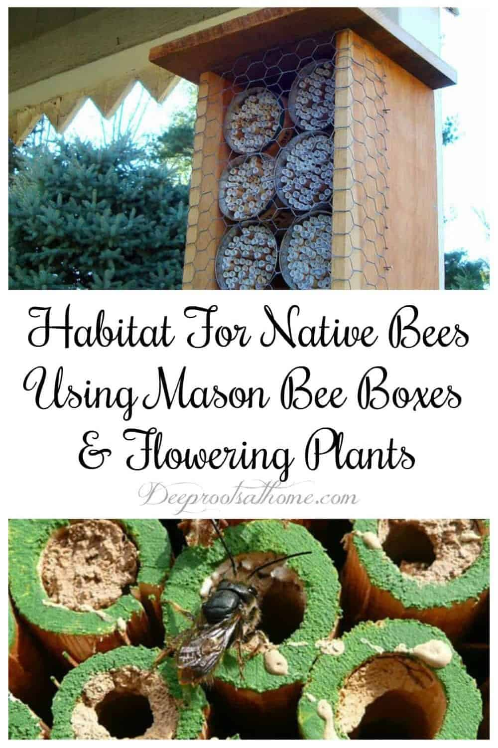 Habitat For Native Bees Using Mason Bee Boxes & Flowering Plants. 2 kinds of mason bee boxes