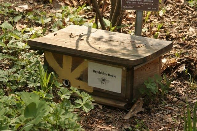 Habitat For Native Bees Using Mason Bee Boxes & Flowering Plants. A housing box in a sheltered location