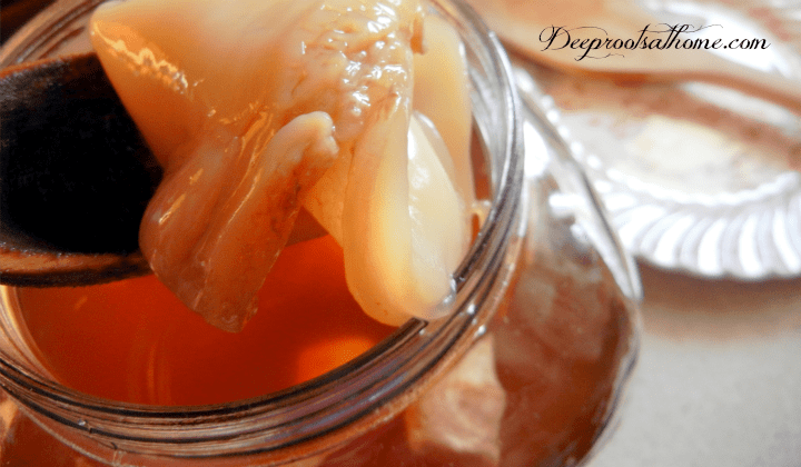 A Complete Beginner's Guide To Brewing Your Own Kombucha. A healthy, growing scoby
