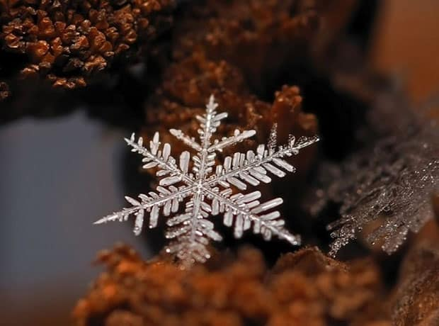 Winter's Hidden Beauty~ The Snowflake, macro photography, snowflake closeup, ice crystal