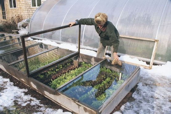 Choosing A Cold Frame That Works for You & 5 Plants That Defy the Snow. A large cold frame in chilly Maine.