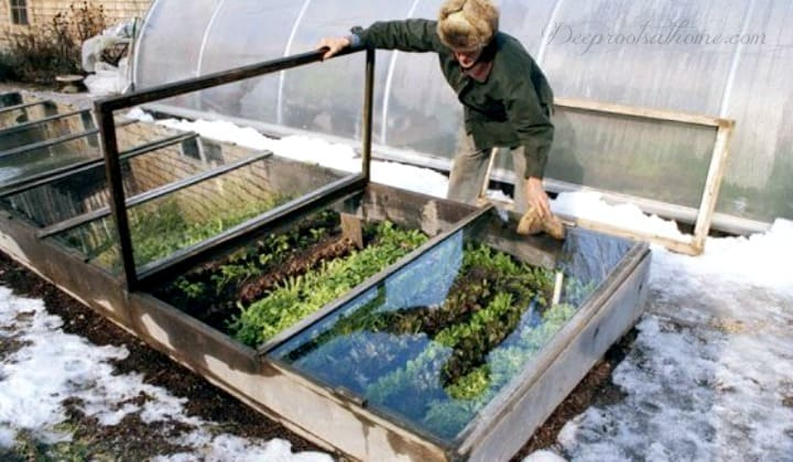Choosing A Cold Frame That Works for You & 5 Plants That Defy the Snow