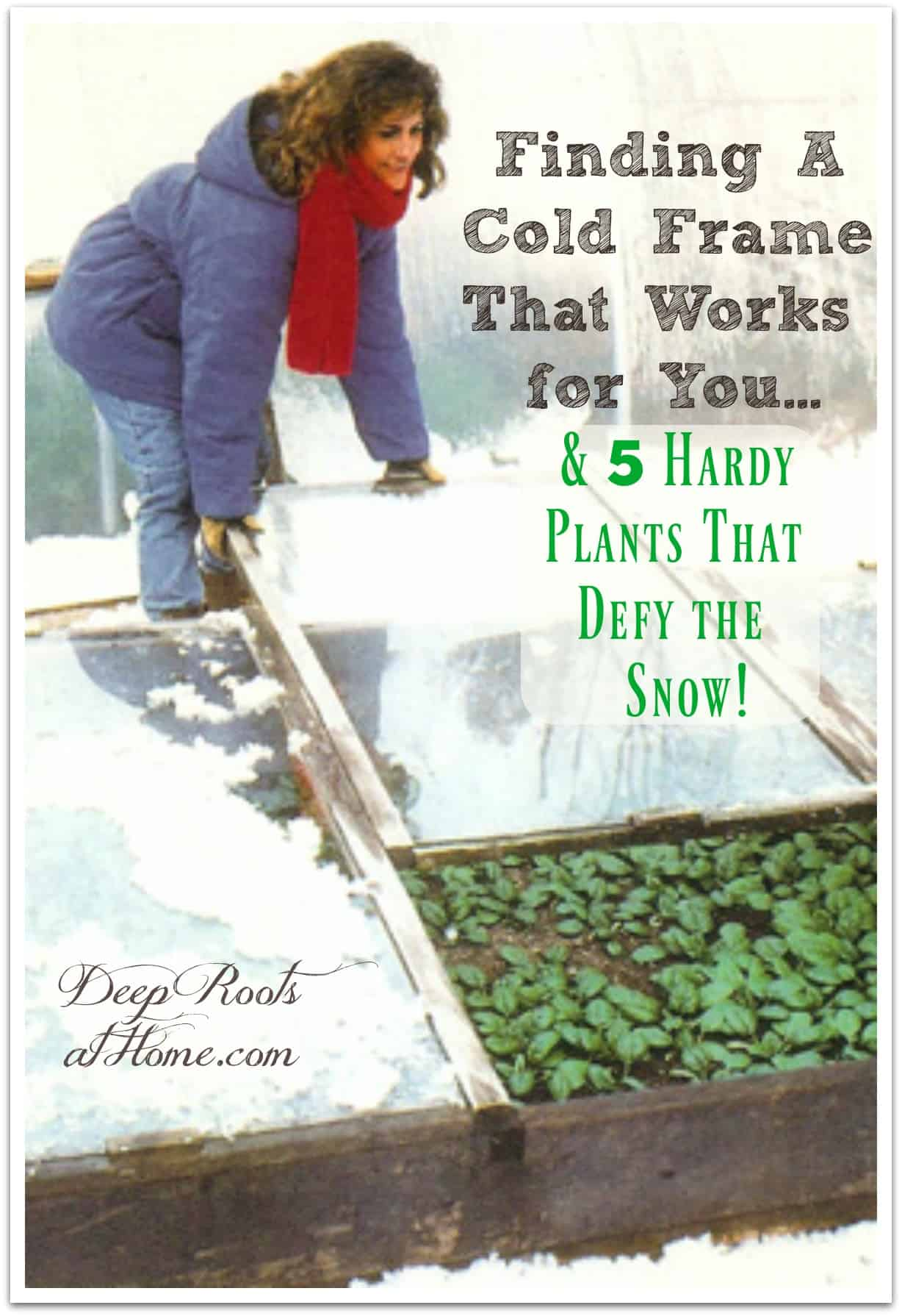 Choosing A Cold Frame That Works for You & 5 Plants That Defy the Snow. A Missouri cold frame under snow with a woman gathering a winter harvest of greens.