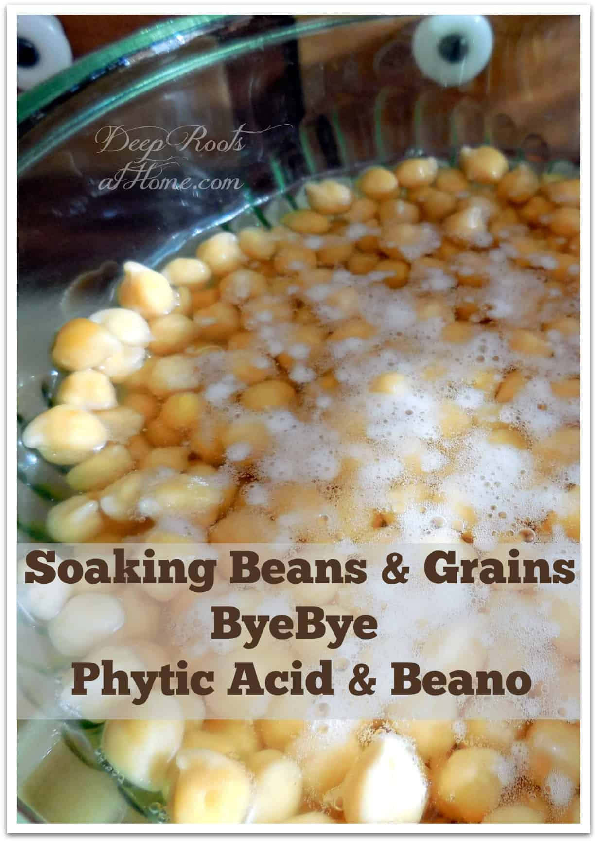 Soaking Beans and Grains ~ ByeBye Phytic Acid and Beano. Soaking chick peas (garbanzo beans) in slightly acidified water to remove phytic acid