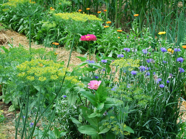 Back To Eden Film & How To Start A Sustainable Garden. A potager garden with herbs and flowers