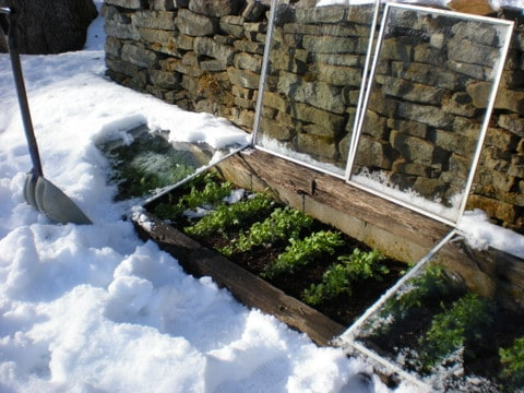 A cold frame in snowy Pennsylvania.