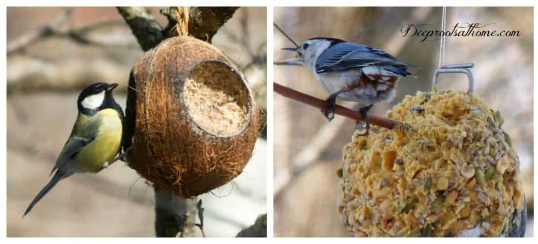 Backyard Birds & Natural Winter Food Sources We Can Provide. Fun ways to put winter food sources in front of the birds that visit our yards!