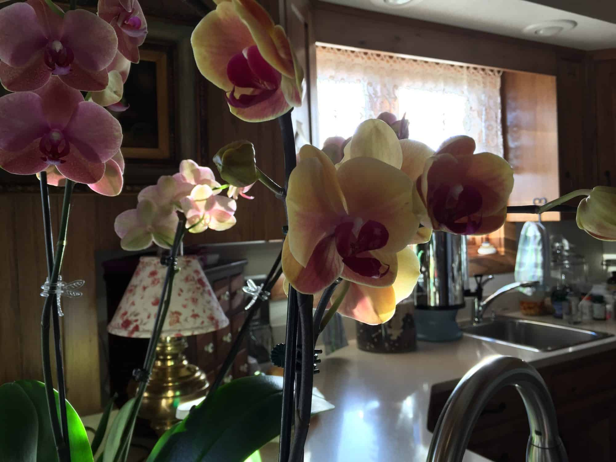 Using Color In Winter, To Cheer The Home & Heart. Orchids