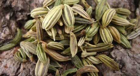 My Safe, Old Tea Remedy To Soothe Colicky Babies & Very Tired Parents. fennel seed