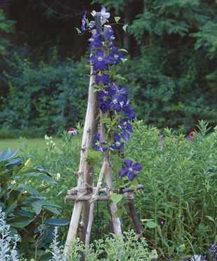 10 Garden Elements With Big Impact. tripod with vines