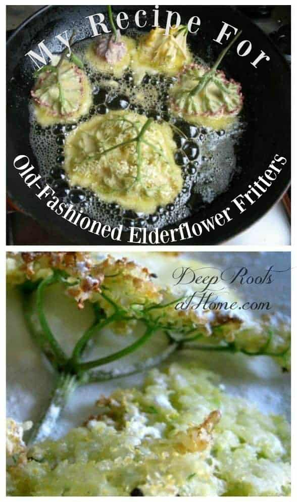 My Recipe For Old-Fashioned Delicacy Elderflower Fritters. Frying elderberry flower heads into old-fashioned fritters, much like pancakes!