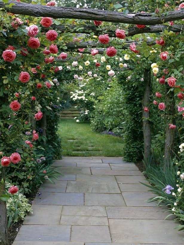 10 Garden Elements With Big Impact. roses on a rustic wooden trellis, climbing
