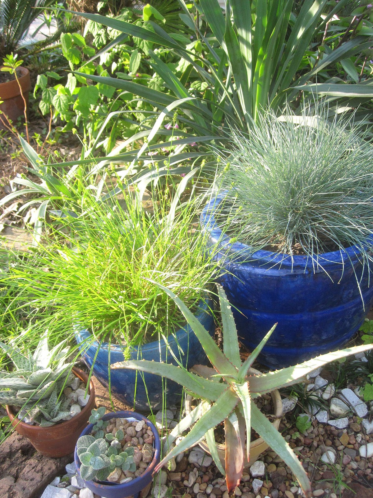 10 Garden Elements With Big Impact. blue pottery, grasses and cactus, container gardening