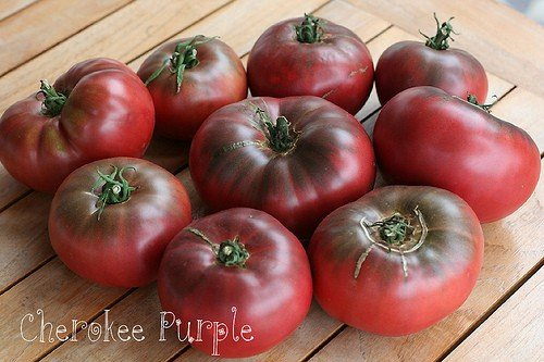 Heirloom Tomatoes & Their Fascinating, Sometimes Funny Stories. Cherokee Purple, a beefsteak tomato