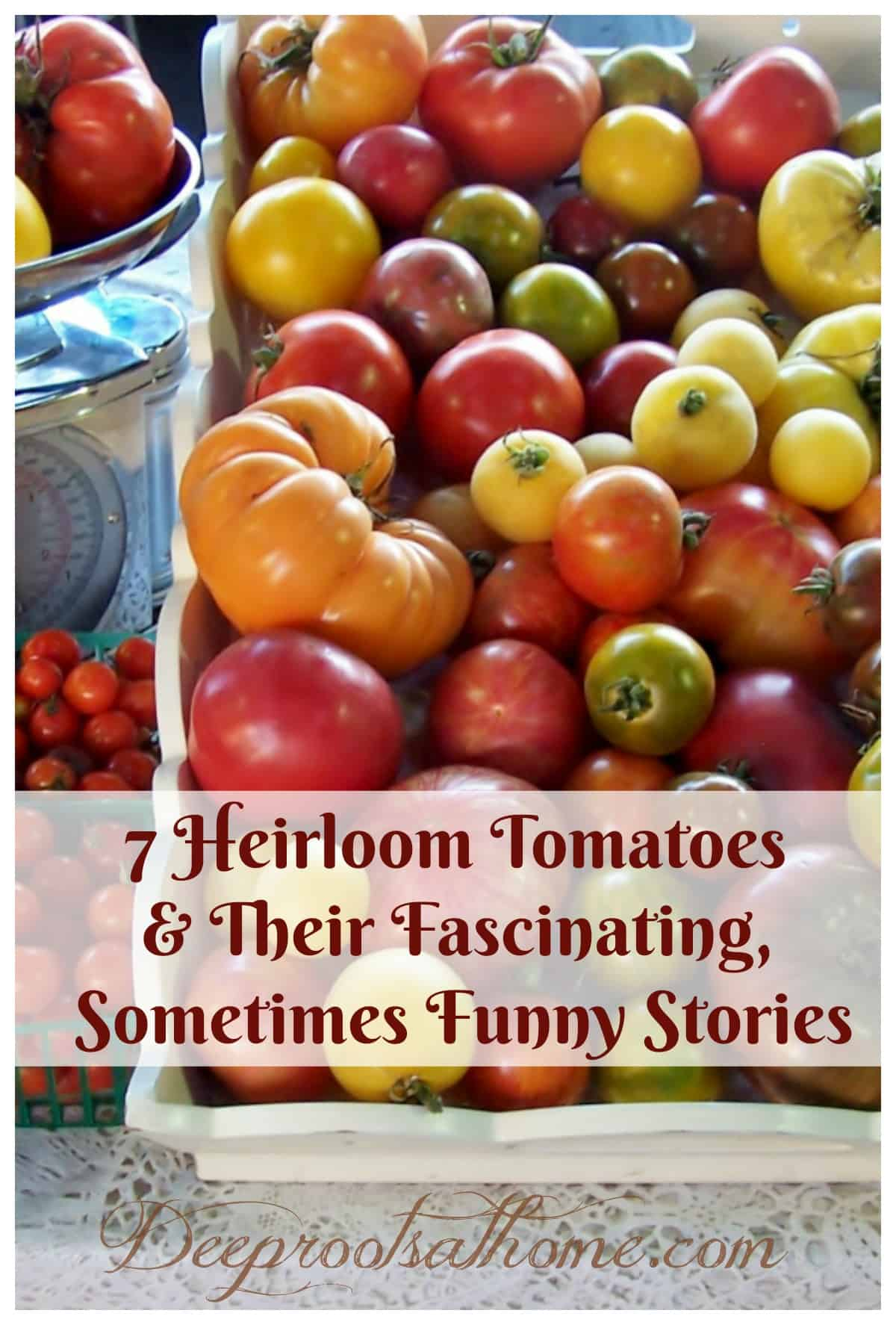 Heirloom Tomatoes & Their Fascinating, Sometimes Funny Stories. A colorful display of the many varieties of heirloom tomatoes available on a table top.