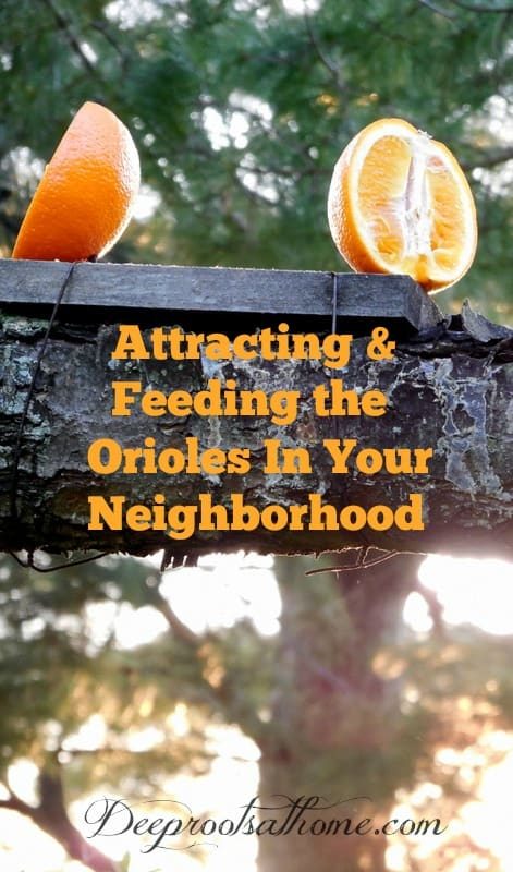 Attracting and Feeding the Orioles In Your Neighborhood. bird feeder