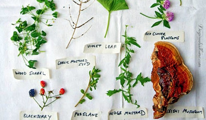 The Joys of Foraging: Edible Wild Free Food For You To Enjoy! edible plants