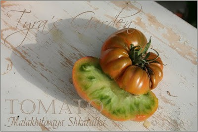Heirloom Tomatoes & Their Fascinating, Sometimes Funny Stories. Malakatovoya Shkatulka heirloom from Russia, lime green