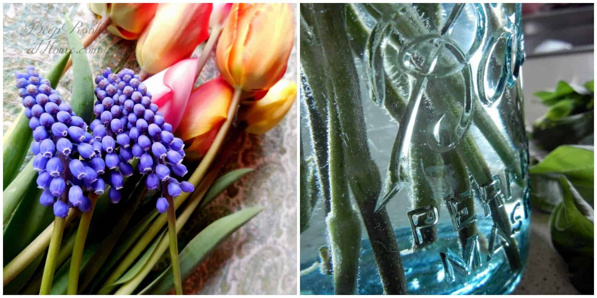 grape hyacinth and tulips and bubbles on stems in water