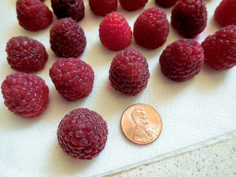 Easy Party Time Chocolate Raspberry Clusters Recipe. Fresh raspberries washed and dried
