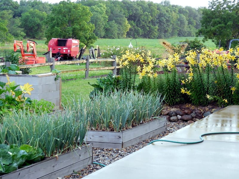 Ode To Summer, A Visual Journal, garden wet after rain, Kubota tractor, onion tops, yellow trumpet lillies