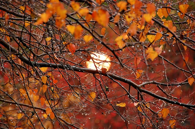 rainy, autumn, chilly days, sun setting, dripping rain on branches
