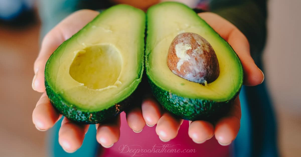 Avocados: Fabulous Ketogenic Recipes & 19 Health Benefits. Hands holding the avocado, halved, the healthiest food known