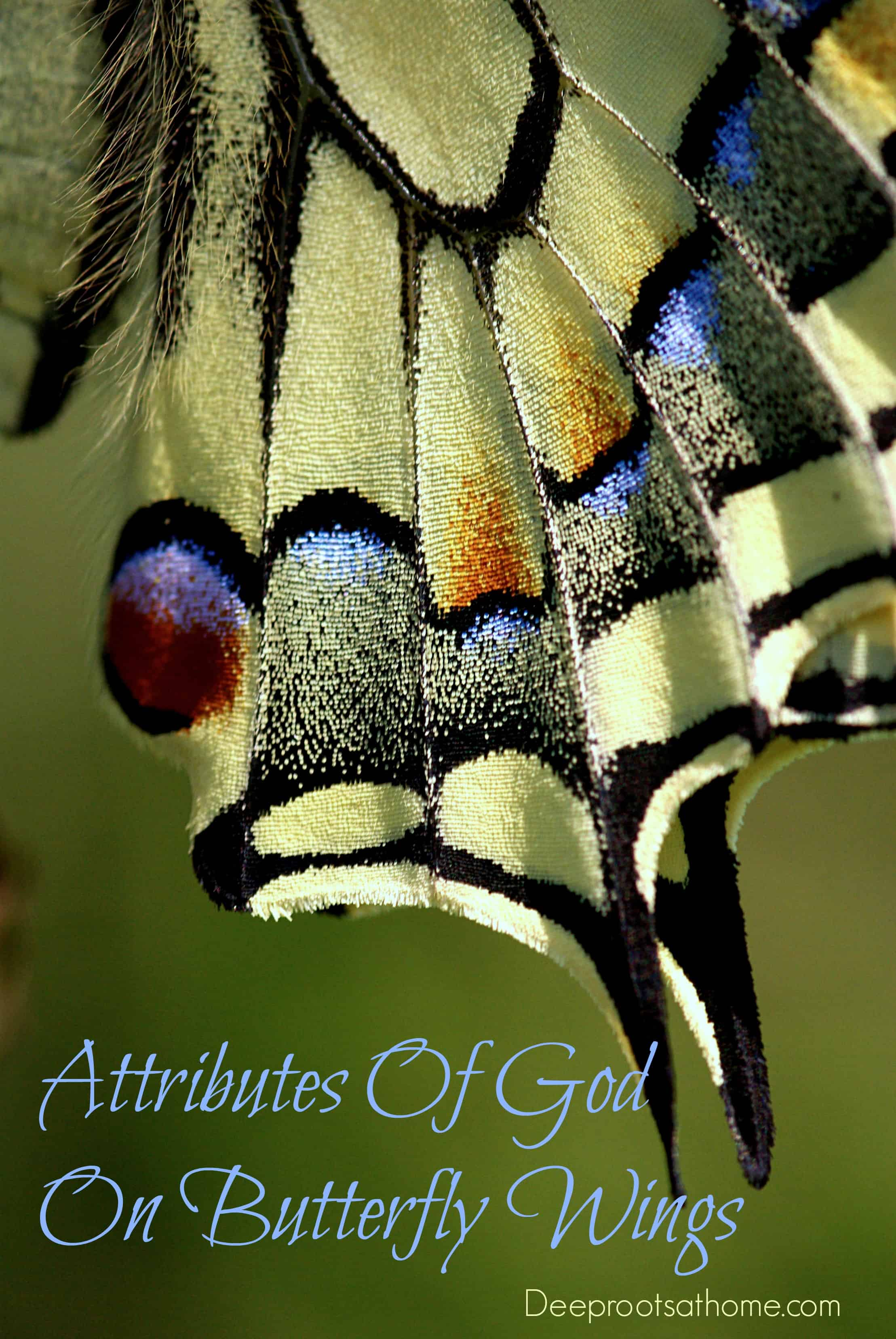 Attributes Of Creator God Found On Butterfly Wings. butterfly wings, scales,