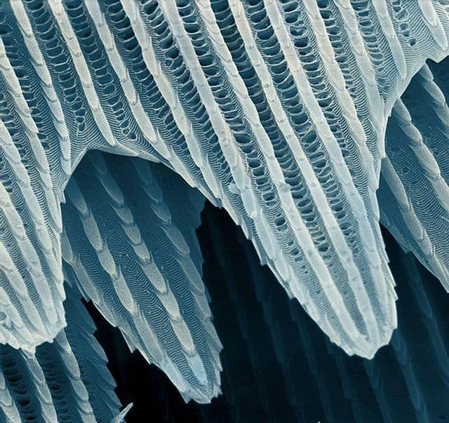butterfly scales, imaging