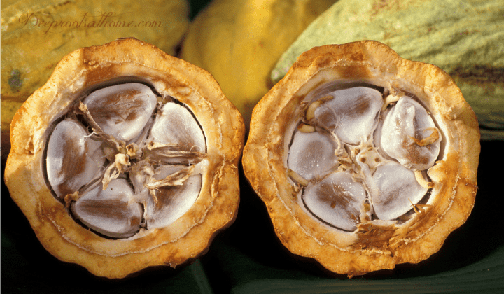 cacao Pods, theobroma is a superfood