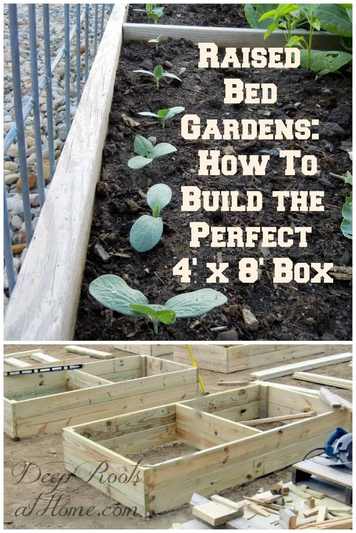 Raised Bed Gardens: How To Build the Perfect 4' x 8' Box, 4' x8's. raised bed garden