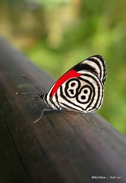 Attributes Of Creator God Found On Butterfly Wings. the 88 butterfly wing