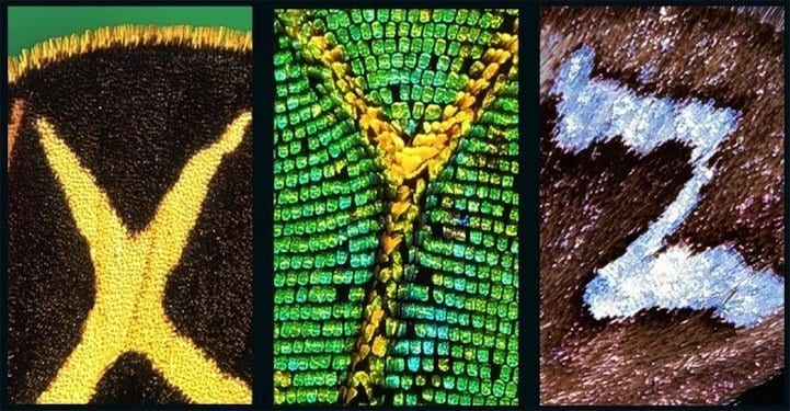 X, Y and Z on butterfly's wings